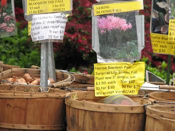 Portland_bulbs_2